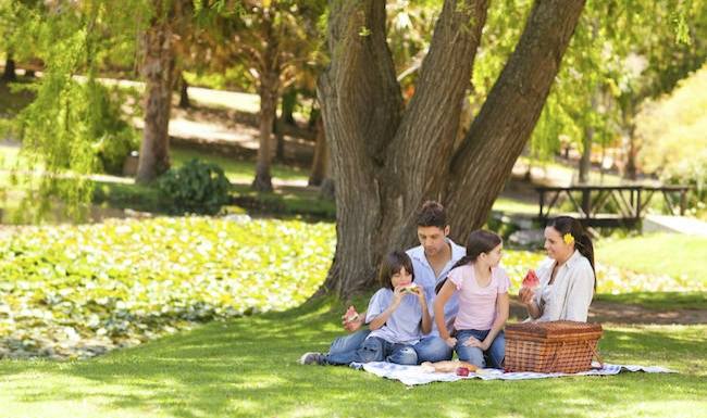 family of 4 having a picnic under a tree in a park
